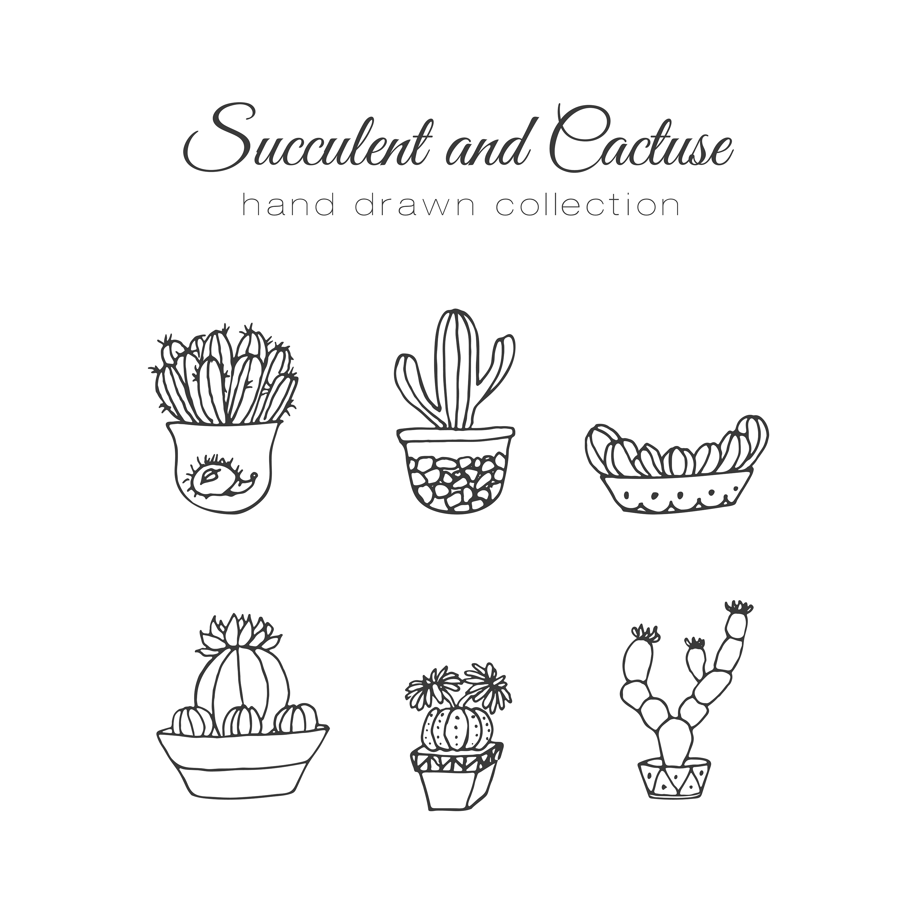 Cactus Illustration Vector Succulent And Cacti Hand Drawn