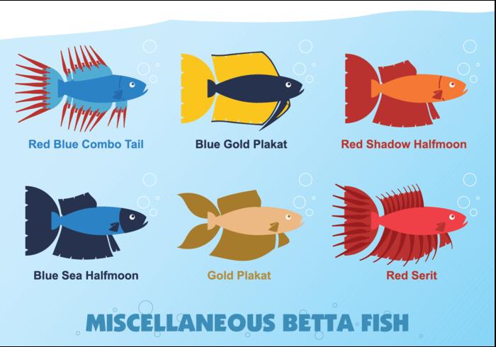 Vecteur de poisson Betta divers