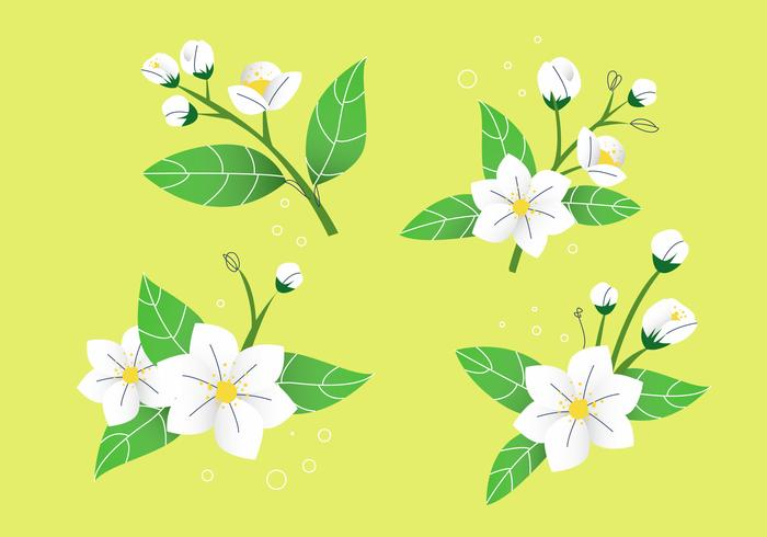 White Jasmine Flower Petals Vector Illustration Stock