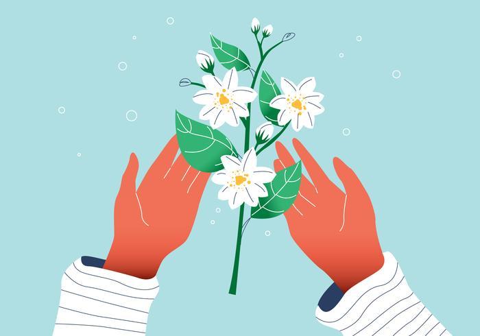 Weiße herrliche Jasmin-Blume auf Handvektor-flacher Illustration