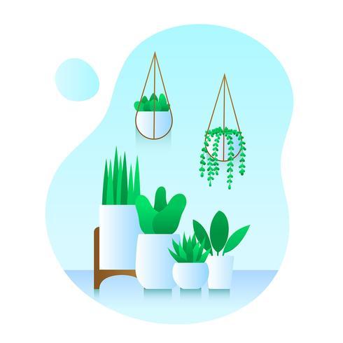 krukväxter uppsättning