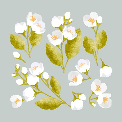 Vector Hand Drawn Jasmine Flowers