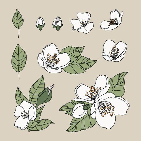 doodled jasmijn bloemen