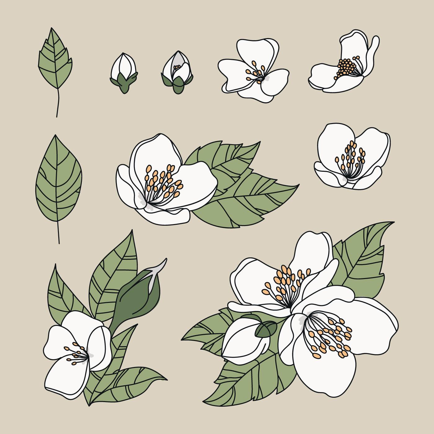 Doodled Jasmine Flowers - Download Free Vectors, Clipart ...