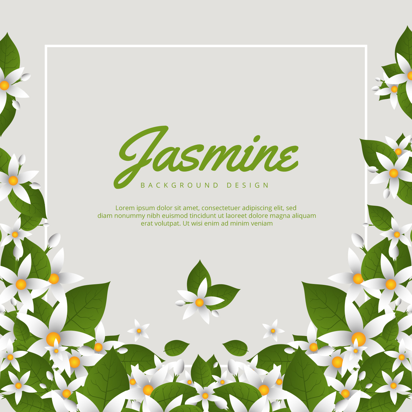 Jasmine Flower Free Vector Art 8750 Free Downloads