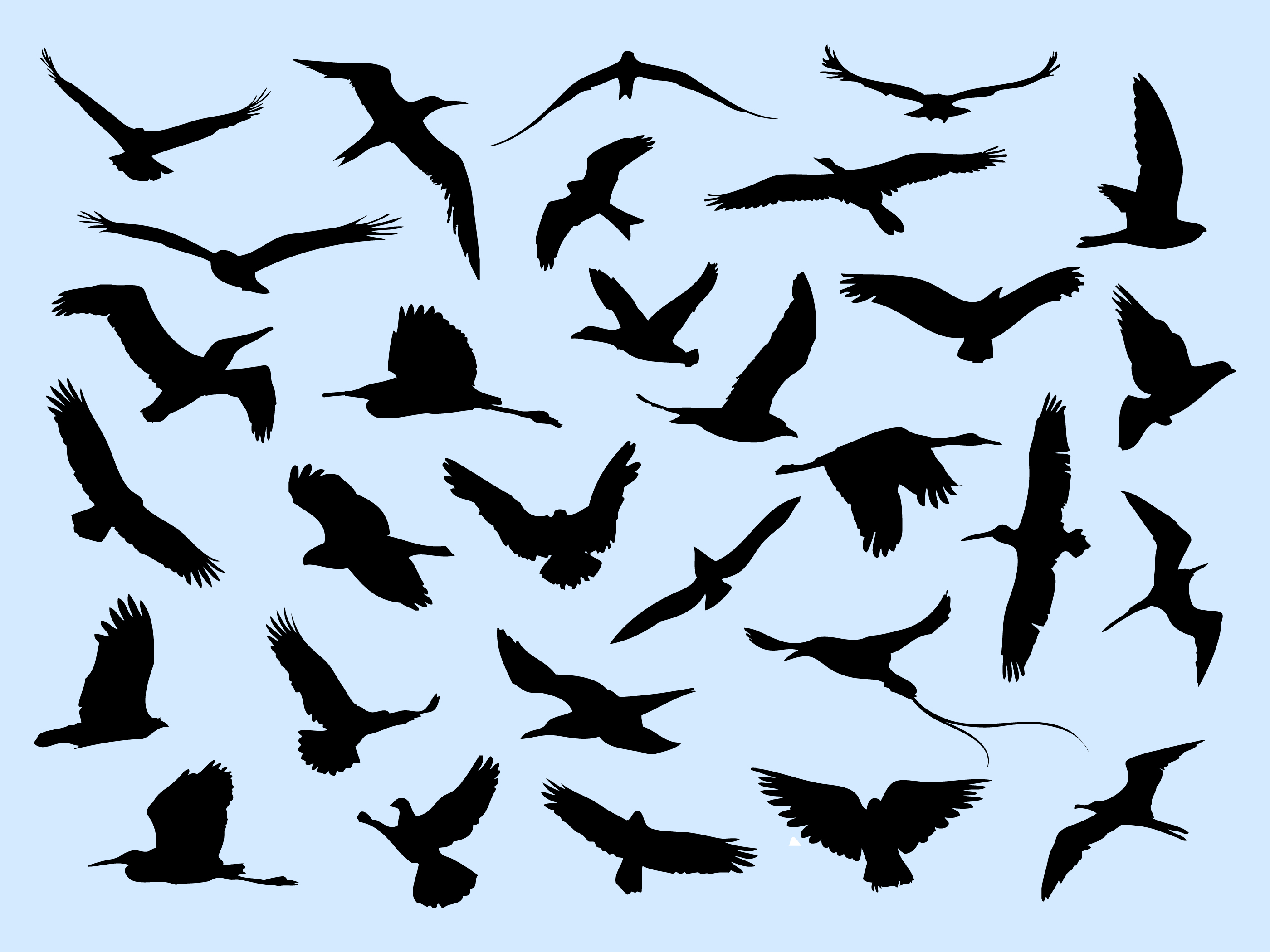 30 Different Flying Birds - Download Free Vector Art ... - photo#19