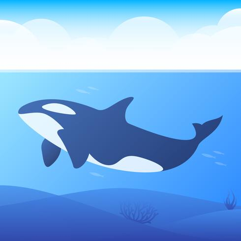 killer whales with underwater view and coral background illustration