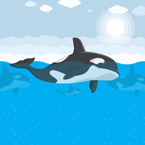 Illustration vectorielle de tueur baleine