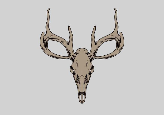 Ilustração em vetor de crânio de veado