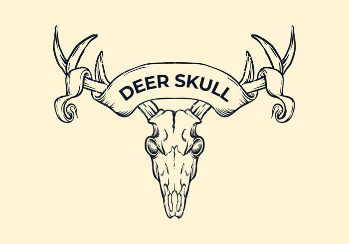 Deer Skull Witih Ribbon