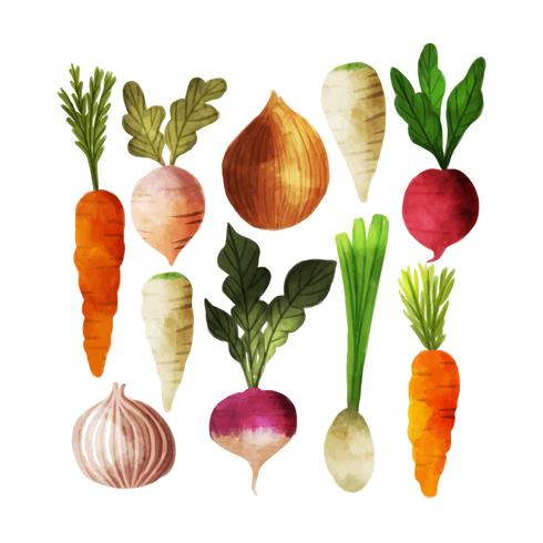 Coleção de legumes em aquarela de vetor