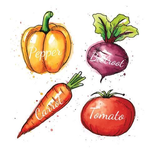 Ilustración acuarela de verduras vector