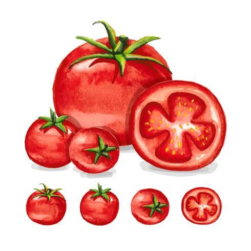 Tomaten Aquarel vector
