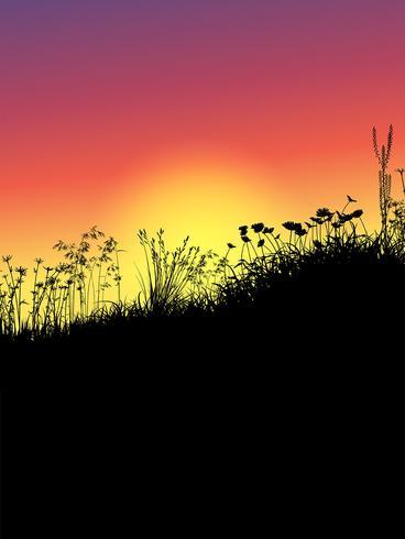 Hierba y flores al atardecer