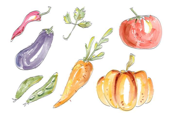 Aquarelle Légumes Vector Set Illustration