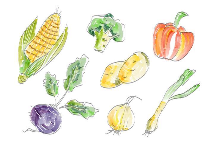 Légumes frais Vector Set Illustration aquarelle