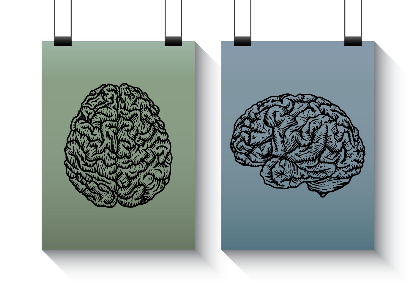 Brain Anatomy Free Vector Art - (555 Free Downloads)