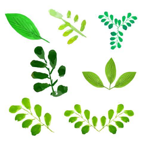 Les arbres verts feuilles set vector illustration