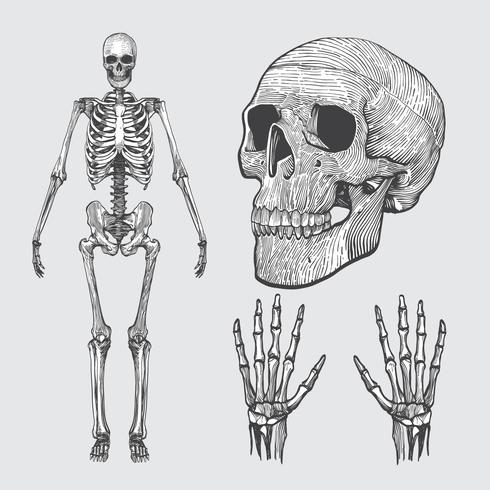 Skeleton Linocut Vector Pack