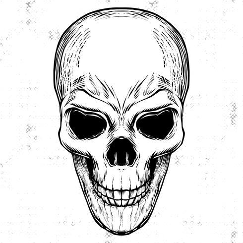 Ilustración de grabado en blanco y negro del cráneo de Linocut