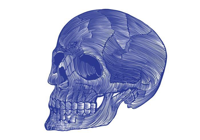 squelette linogravure