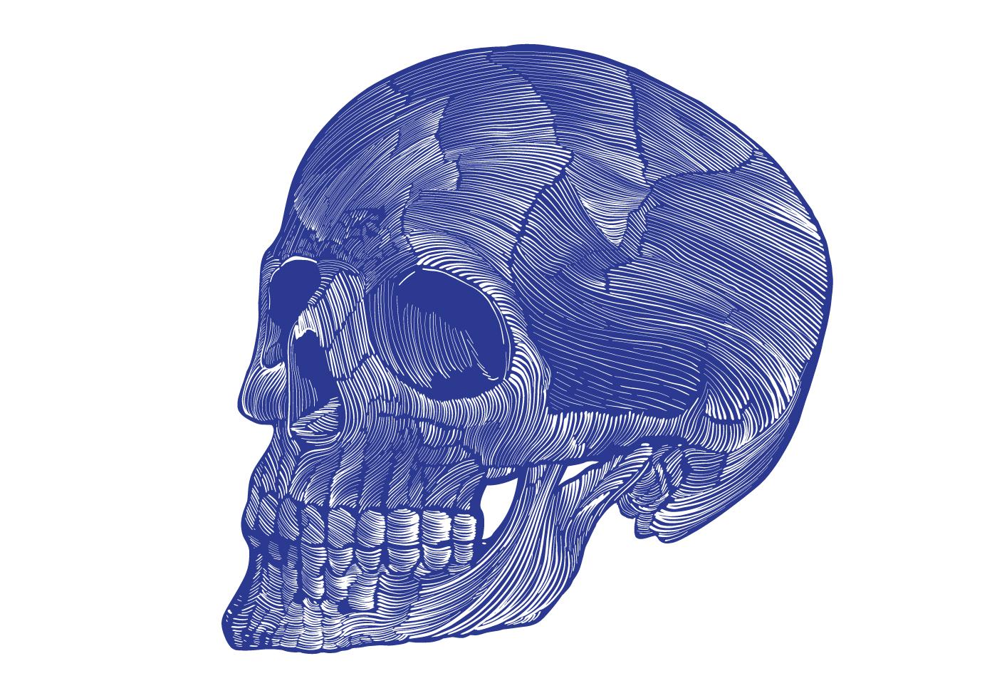 Skeletal Hand Diagram