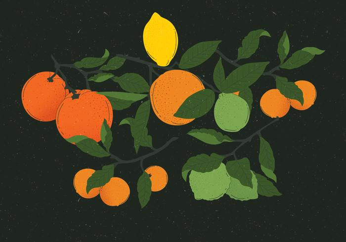 Vintage Citrus Illustrations Vector