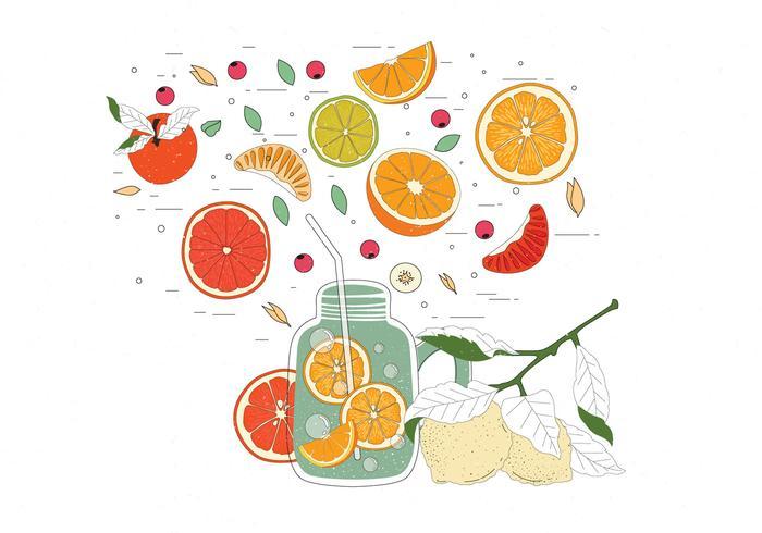 Vintage Citrus Ingredients Illustrations Vetor