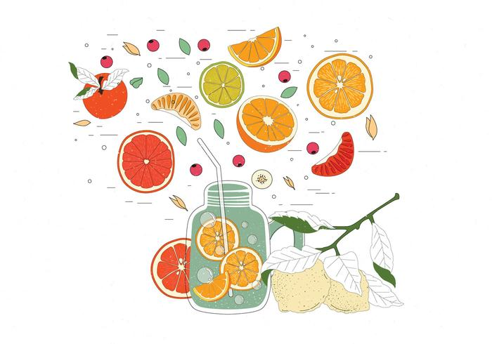 Vintage Citrus Ingredients Illustrations Vector