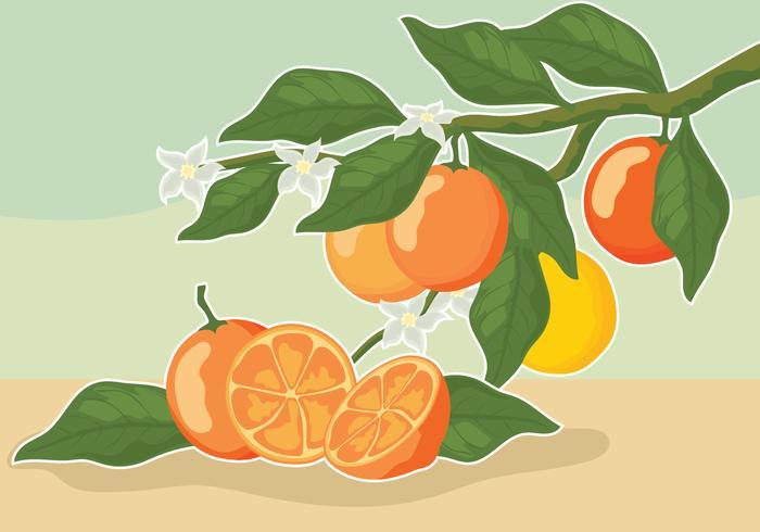 Weinlese-Zitrusfrucht-Illustrationen