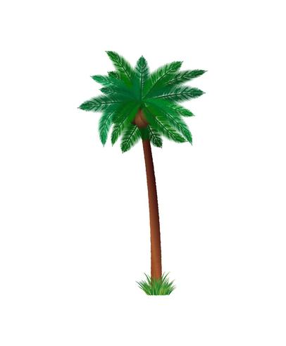 Detailed palm tree vector