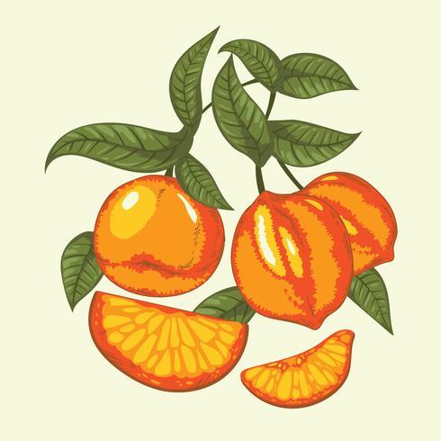 Ilustração Vintage de frutas cítricas em cores vibrantes