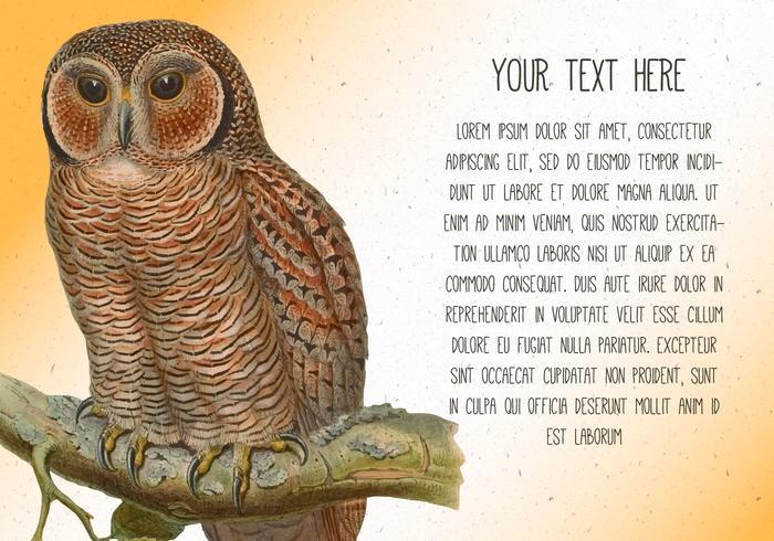 Modelo de texto vintage coruja