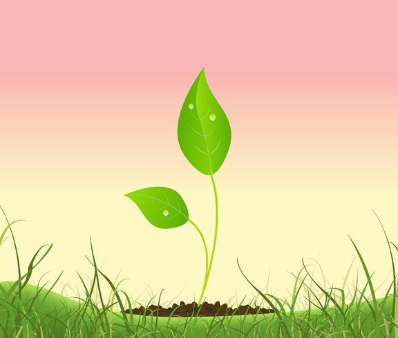 Planta de primavera que crece en un jardín