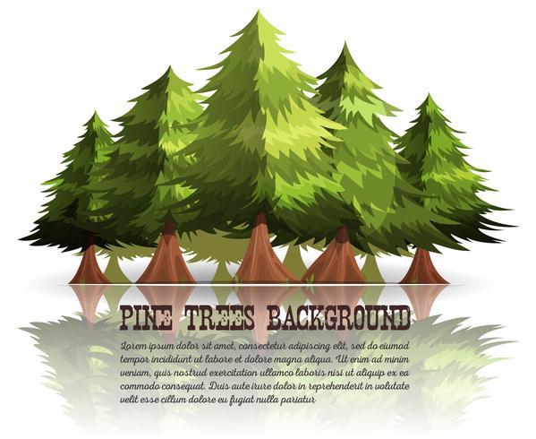 Fondo de árboles de pino y abetos