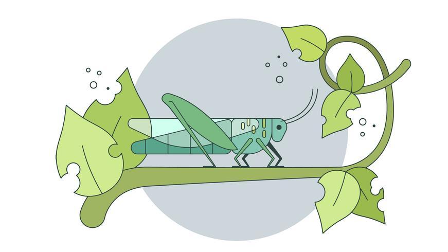 Vecteur de sauterelle