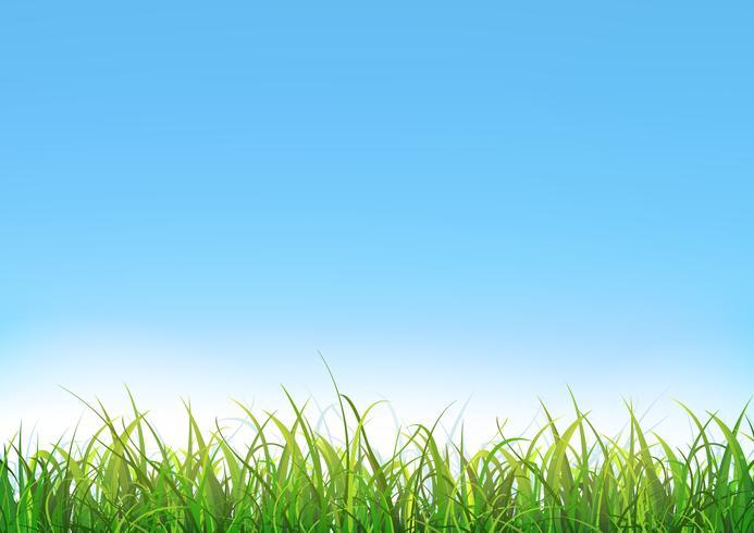 Fond de ciel bleu avec de l'herbe verte vecteur