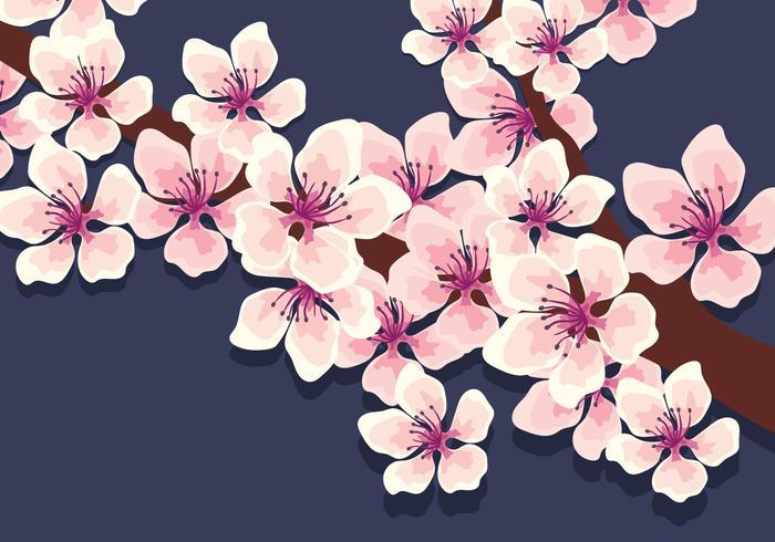 櫻花背景 免費下載 | 天天瘋後製