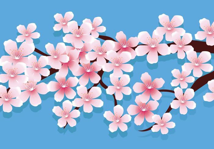 Kirschblüten-Vektor-Illustration