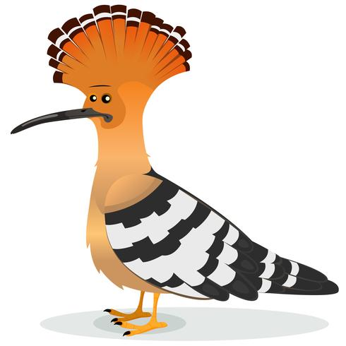 hoopoe fågel