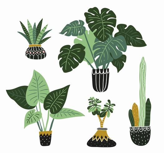 Hand drawn vector tropical house plants.