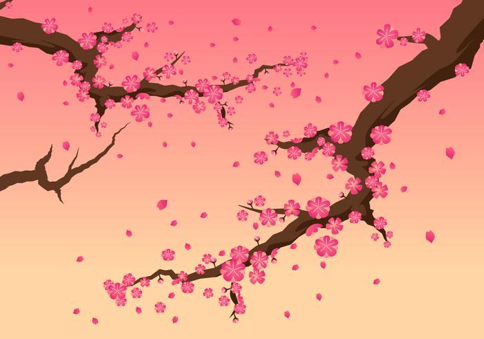 Vectores hermosa flor de cerezo