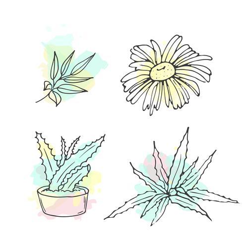 Ilustração de cosméticos orgânicos. Frascos de cosméticos de vetor. Doodle itens de cuidados da pele. Conjunto de mão desenhada. Loção de ervas. Bio creme. vetor