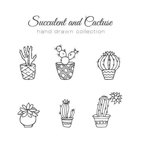 Hand drawn succulent and cacti set vector