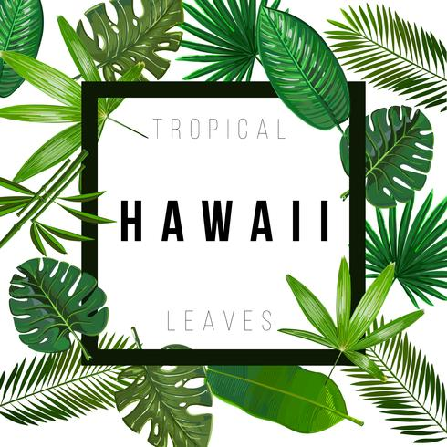 Hojas tropicales sobre fondo blanco con signo aislado Hawaii vector