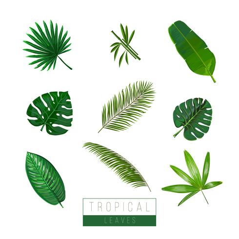 Vector tropical leaves isolate on white. Palma, bamboo, exotic plants