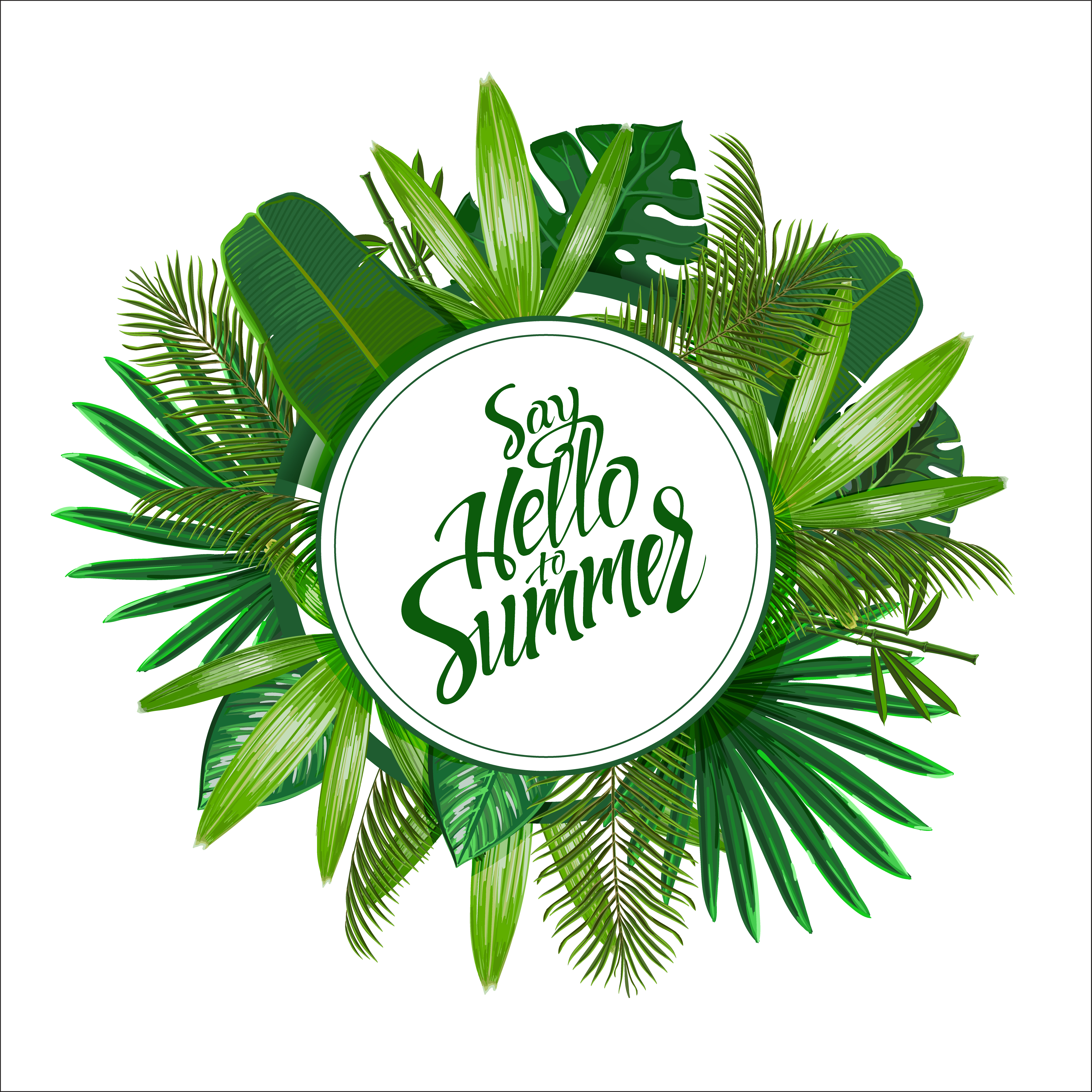 Tropical Foliage Background:  Tropical Leaves Around The Circle On White Background
