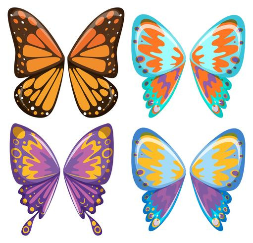 Different pattern of butterfly wings