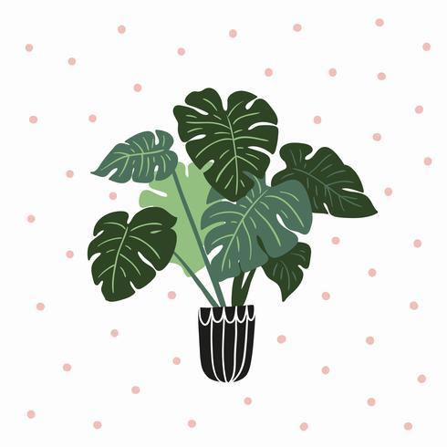 Plante de maison tropicale dessinée à la main