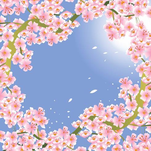 Fondo de flor de cerezo rosa vector